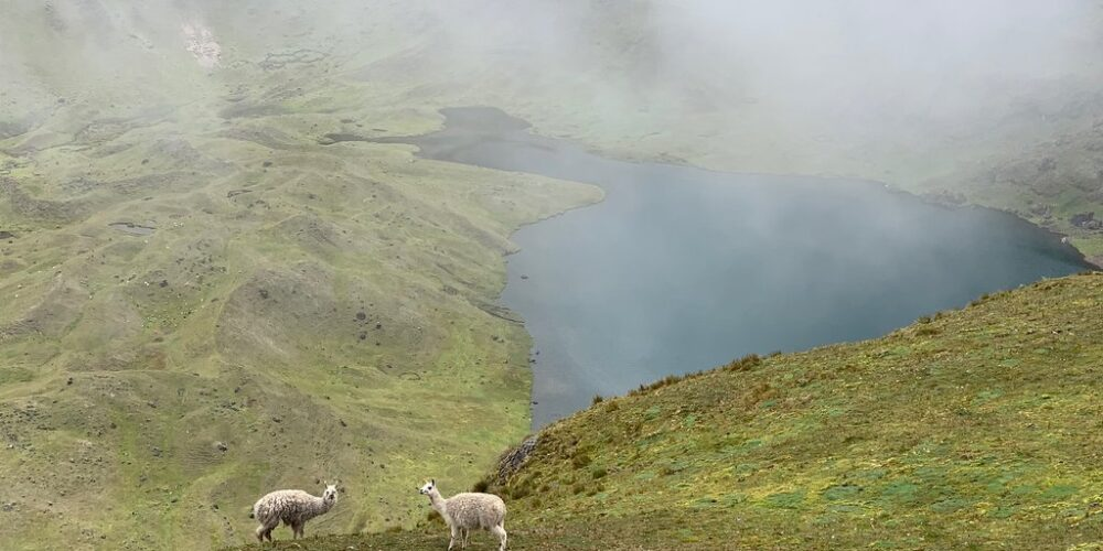 Enjoying a view of the lake and the beautiful llamas in the lares trek 3 days