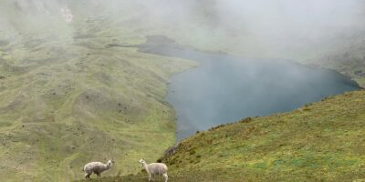 11Enjoying a view of the lake and the beautiful llamas in the lares trek 3 days