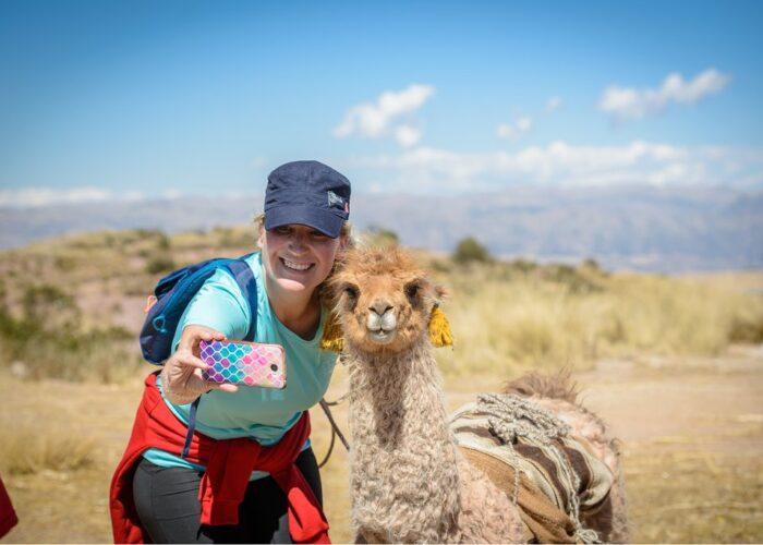 Beautiful alpaca with a woman taking a photo in huchuy qosqo