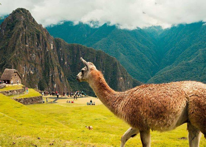 Trip Machu Picchu