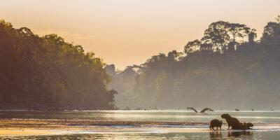 11Manu National Park 8 days