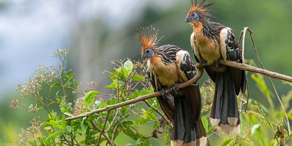 In tambopata you can see birds