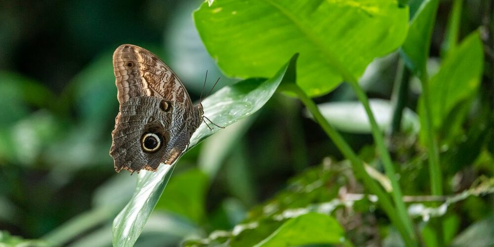 Beautiful butterfly in Tambopata Tour