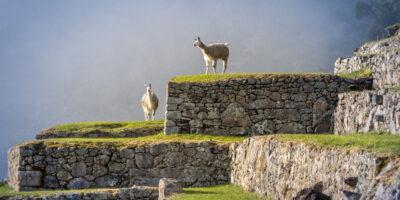 11Machu Picchu Tour