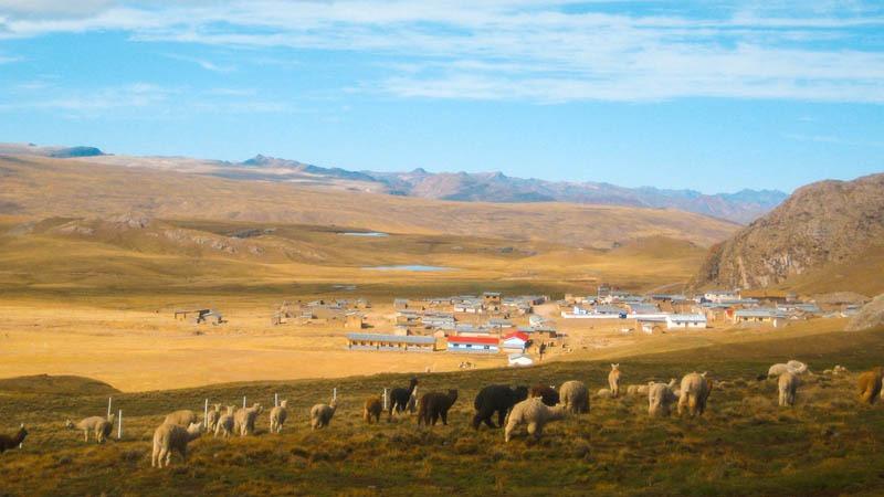 Community of phinaya