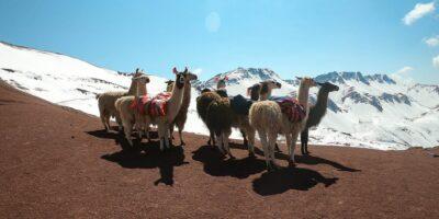 11beautiful views and llamas on the Ausangate trek 5 days
