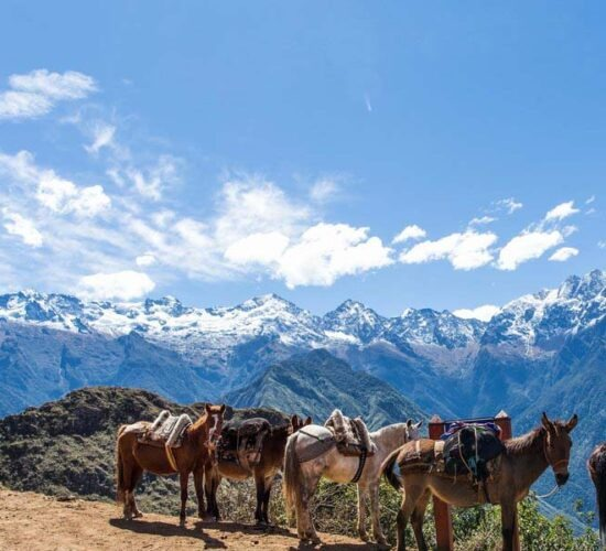 beautiful what we see snowy mountains and horses