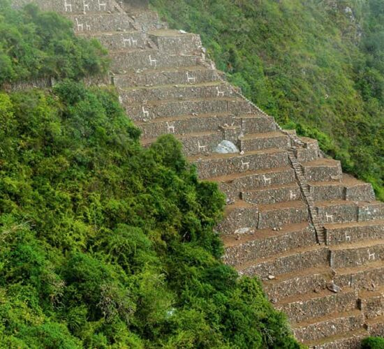 Choquequirao archaeological complex offers you views of the stone llamas,