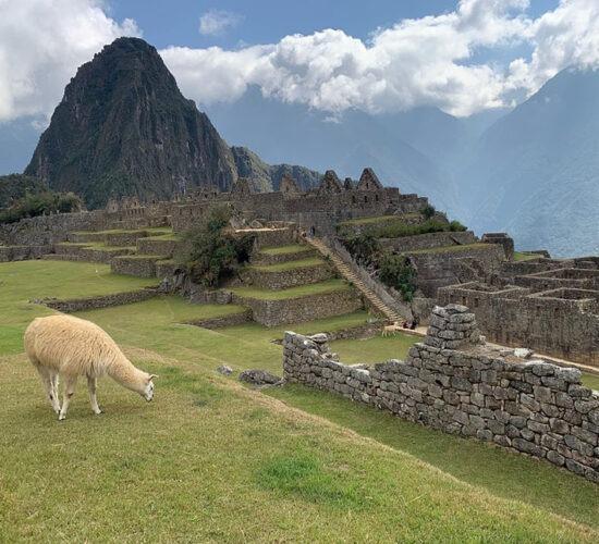 Beautiful view of machu picchu next to the llama eating