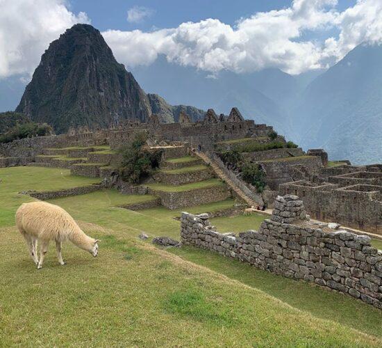 Machu Picchu PeruMachu Picchu and the llama eating beautiful