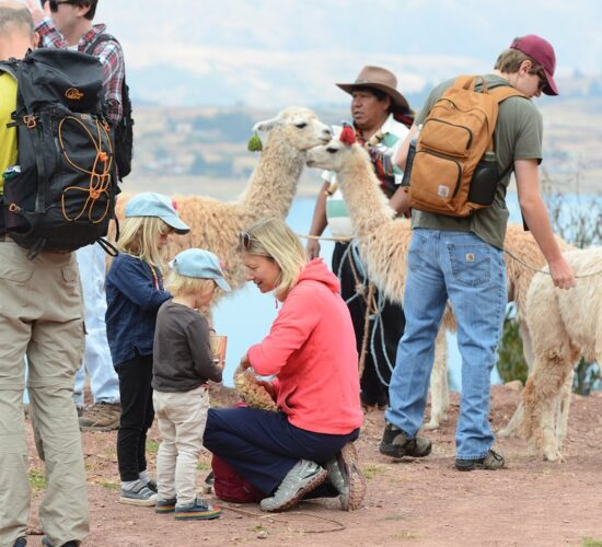 Walking alongside the Llama